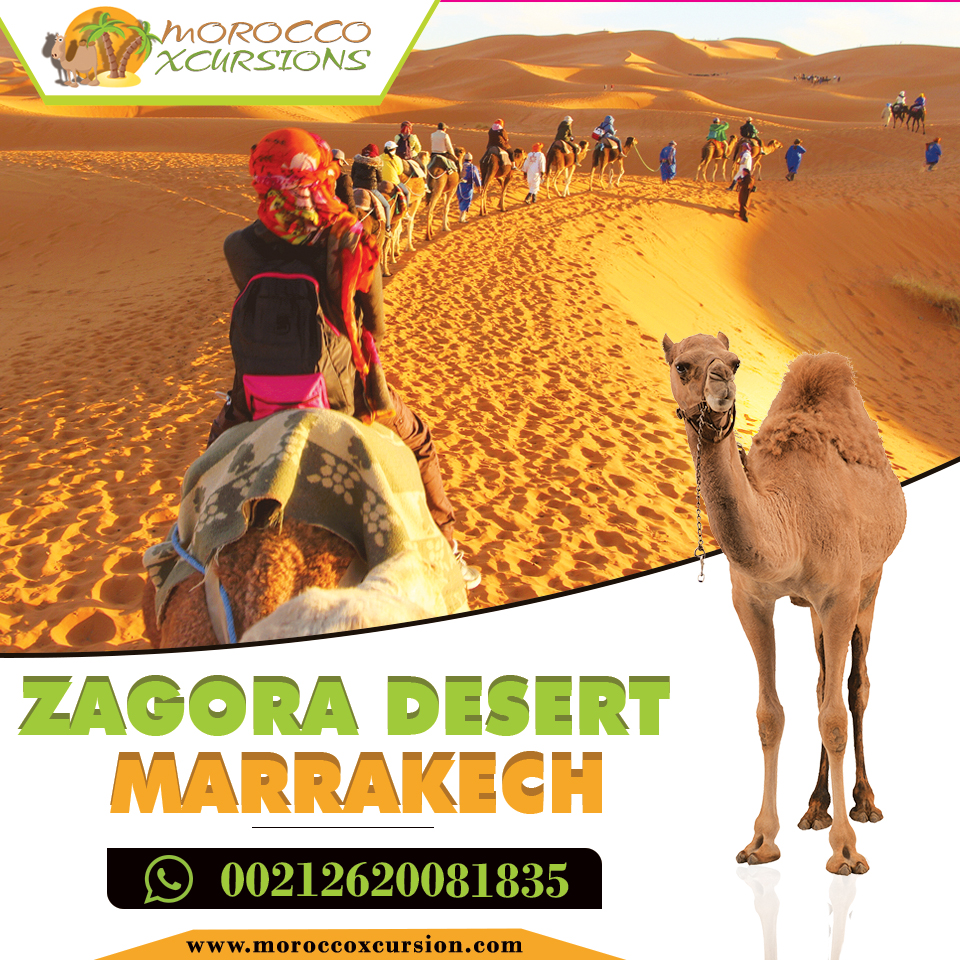 Zagora desert marrakech | free Classified | Free Advertising | free classified ads