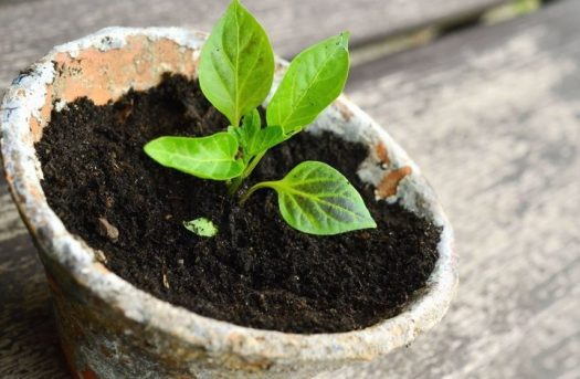 Choose super potassium humate for better results of plants growth | free Classified | Free Advertising | free classified ads